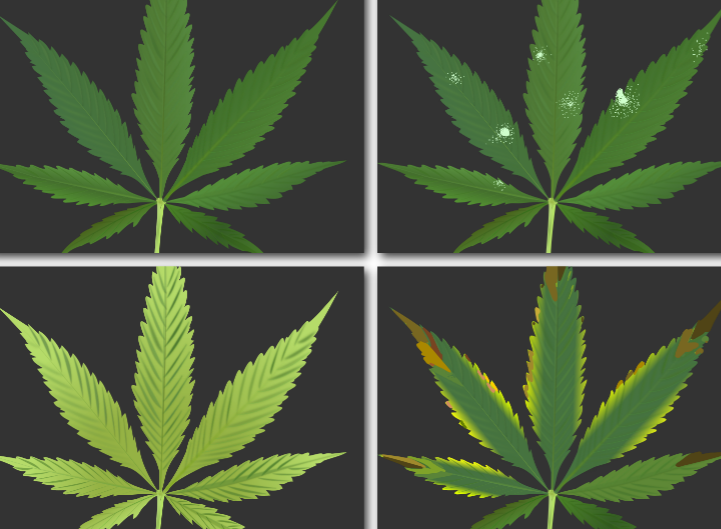 Troubleshooting Cannabis